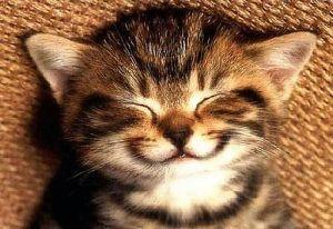 Senyum 227